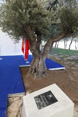 Olivo plantado en memoria de los 6 millones de judíos asesinados durante el Holcausto