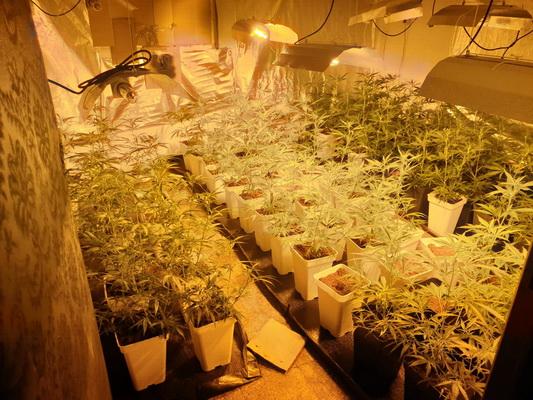 Incautación marihuana